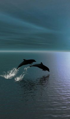 Freedom: Two Dolphins in The Ocean. (Fact: Dolphins establish very strong social…