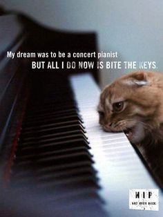 Because life is a piano that is set before us to play, and this is usually how that ends up looking. The Piano Biter Cool Cats, I Love Cats, Funny Cats, Funny Animals, Cute Animals, Crazy Cat Lady, Crazy Cats, Gatos Cool, Gato Grande
