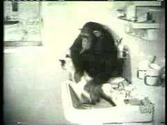 Monkey Washing a Cat always makes me laugh