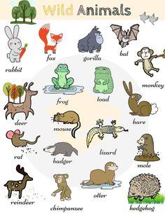 Wild Animals: List of Wild Animal Names . - Wild Animals: List of Wild Animal Names with Images – 7 E S L - English Vocabulary Words, Learn English Words, English Lessons, English Writing, English Study, English Grammar, English Language Learning, Teaching English, Wild Animals List