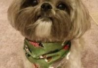 Shih Tzu Frisuren Best Of 82 Best Shih Tzu Grooming Hairstyles Images In 2019 Ideal Image, No Image, Shih Tzu, Hair Images, Best Series, Photo Galleries, The Incredibles, Hairstyles, Dogs