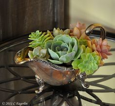 Classy succulent garden in a silver creamer --- I have a silver gravy boat I could do this in! :)