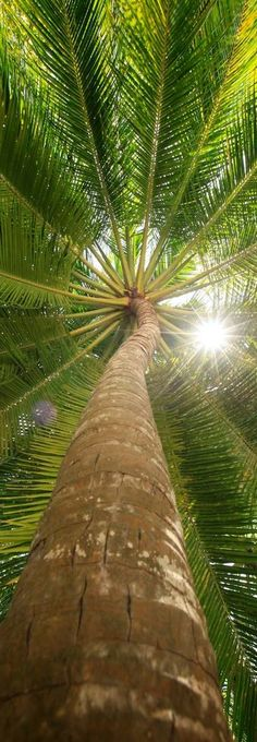 Refreshing palm tree view at the Baros Maldives resort • photo: Baros Maldives