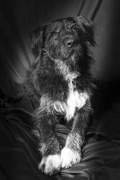 Socks, our latest star. Study Session film noir style. Happy Pets.