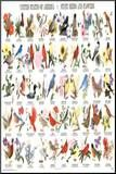 State Birds and Flowers Educational Chart Poster Mounted Print
