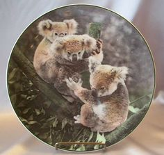 Royal Doulton Koala Bears Collector Plate.