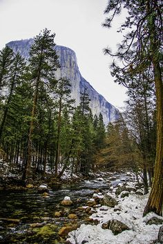 Yosemite Park forest, California.  More California Dreaming:  http://www.zazzle.com/thenaughtynook/gifts?cg=196724005075615895&rf=238479042766184488  http://www.cafepress.com/thenaughtynook/9990953