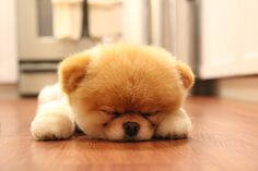 137 Best Puppies Dogs Images Pets Cute Dogs Cute Puppies