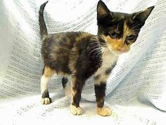 Poor baby will die tomorrow if not rescued.visit pets on deathrow on facebook New York by 11am.Sept 18.PLEASE!! Save these babies.