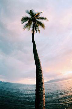 palm tree sunset waves beach babes tan summer pool bikinis gypsy mermaid boho wanderlust