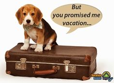 But...you really promised me vacation! #vacation #travel #puppy