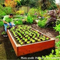 Safe Wood Sealers for Raised Bed and Container Gardens