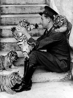 Four tiger cubs with their dashing young keeper at Whipsnade Zoo, England, 1937