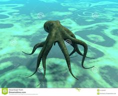 octopus swimming - Google Search