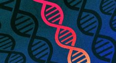 But opinions vary a lot based on peoples religious beliefs and how much they know about gene editing in general.Two-thirds of Americans approve of editing human DNA to treat disease