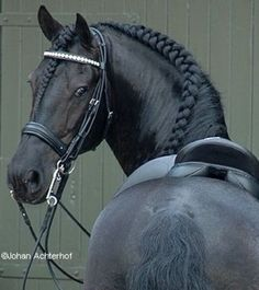 This picture is amazing, it shows the true beauty and power of the horse. <3