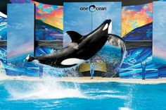 Top Tips to Maximize Your Fun at SeaWorld Orlando | Inside Seaworld