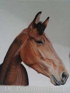 """Horse Faniella"" realistic portrait drawing made with pastelpencils and pastelchalc"