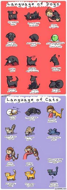 LA ENTROPIA DEL QUINTAL: Lenguaje de los Gatos y Perros