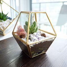 Terrarium Ideas, Glass Terrarium, Mini Gardens, Miniature Fairy Gardens, Fairy Garden Pots, Target Decor, Forest Fairy, Glass Boxes, Awesome Bedrooms