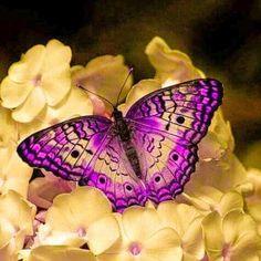 Butterfly Kisses, Butterfly Flowers, Butterfly Wings, Bee Moth, Beautiful Bugs, Beautiful Butterflies, Borboleta Tattoo, Cool Insects, Hummingbirds