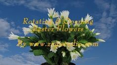 zygistudio - YouTube Easter Plants, Nature, Youtube, Flowers, Naturaleza, Florals, Off Grid, Natural, Flower