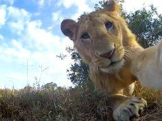 One photo by myself - O fotógrafo Chris Bray, 29 anos, usou um carrinho de controle remoto e uma câmera para conseguir closes de animais no Quênia Foto: The Grosby Group