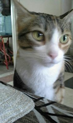 Katty