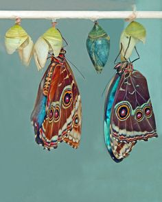 'just when the caterpillar thought life was over, it turned into a butterfly'…..nice :)