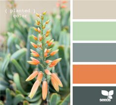 orange blue green grey
