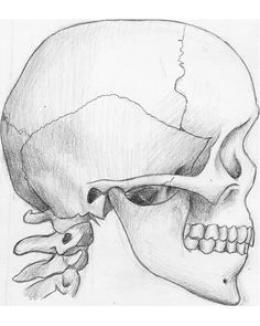 side view skeleton | Creative Commons Attribution-Noncommercial-No Derivative Works 3.0 ...