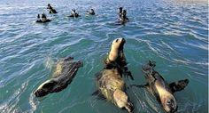 Puerto Madryn: ballenas, lobos, pingüinos y una amplia fauna marina para contactarse con la naturaleza