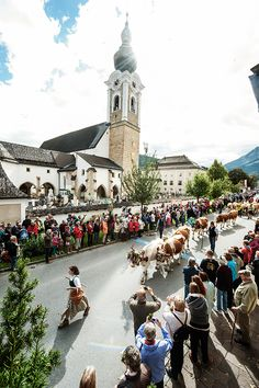 LET's RUMBLE - autumn is coming. On your marks, cows, go!Parade this coming Saturday, at 10 am in Altenmarkt-Zauchensee. Salzburg, The Hobbit, Austria, Homecoming Parade, Dolores Park, Street View, Cows, Places, Summer