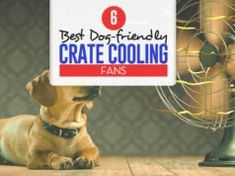 Top 6 Best Dog Crate Cooling Fans Best Puppies, Toy Puppies, Best Dogs, Dog Grooming Salons, Dog Grooming Business, Dog Bath Tub, Bath Tubs, Puppy Food Homemade, Dogs