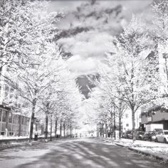 The first roll of black and white infrared I've been happy with.