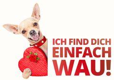 ...das muss einfach mal gesagt werden!!  Und bei dieser Gelegenheit: <3 Schönen Valentinstag! <3   www.tierischehotels.com #ichliebedich #schöndassesdichgibt #danke #valentinstag  #tierischerurlaub - (c) Bild: Uts - Uppercut.at