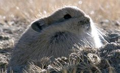 On behalf of all Tibetan Pikas, I appreciate your love for us.
