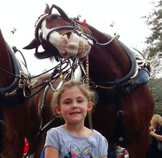 Five-year-old Elise Frew was on holiday in Florida when her mum Carolyn decided to get a pic for the album - and Sparky the Clydesdale horse wanted in on the action.  As Elise smiled for the camera, Sparky bent his neck over to one side behind her and gave us the biggest toothy grin we've ever seen.