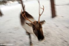 Norama | I GRANDI TREKKING Ski treks, solo i percorsi più belli SPECIALE FONDO Ski Trek - 235 Km - Ylläs, Pallas, Hetta