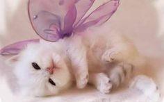 KITTEN HAZ FAIRY WINGS!!!! SO adorable!!!
