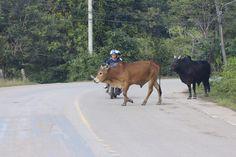 Thaimaa autonvuokraus21