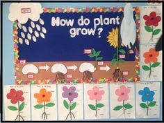 Plants bulletin board idea- life cycle of a plant- A very simple and impressive display that also acts as a teaching board. Preschool Science, Science For Kids, Science Activities, Science Projects, School Projects, Plant Lessons, Science Display, Teaching Plants, Healthy Schools