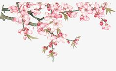 Peach Blossom Tree, Cherry Blossom Art, Peach Trees, Peach Blossoms, Peach Flowers, Blossom Trees, Spring Blossom, Botanical Flowers, Queens Wallpaper