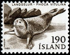 Marine Mammals on Stamps. Dolphins, Whales, Seals, etc - Stamp Community Forum - Page 2 Harbor Seal, Marine Reserves, Postage Stamp Art, Penny Black, Fauna, Stamp Collecting, Digital Stamps, Natural History, Iceland