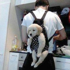 ◆【犬画像05】  いたずらしてたら、こうなった…  少し反省の表情に萌え…  ⇒ pic.twitter.com/0dF9gNJYRi