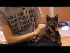 A missing back foot? That's not a problem for Best Friends - Utah resident Mr. Stubbs!  Don't miss this brave little kitten's journey to happily-ever-after and repin to help us Save Them All.