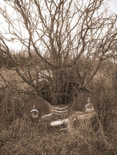 tree growing out of abandoned vintage car