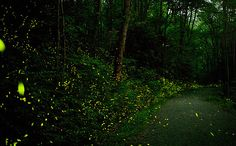 Great Smoky Mountains National Park - for about two weeks in June, fireflies descend on Elkmont Campground and put on a synchronized light show.  When we lived in Gatlinburg, seeing the fireflies was one of my favorite things to do.  This is a MUST SEE!