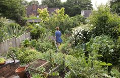 Credit: Sophia Evans Alys Fowler pictured in her garden, which she has planted to provide as much food as possible for pollinating insects. ...