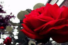 """""""Mieux vaut respirer que de cueillir les roses, Et les plus beaux jardins sont où l'on n'entre pas."""" #FernandGregh"""